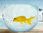 Ideas are like Fish