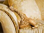 Want a Mini Giraffe?