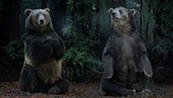 Hyundai's Bears
