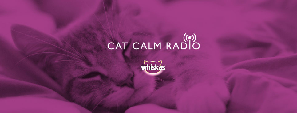 CatCalmRadio_webgrab