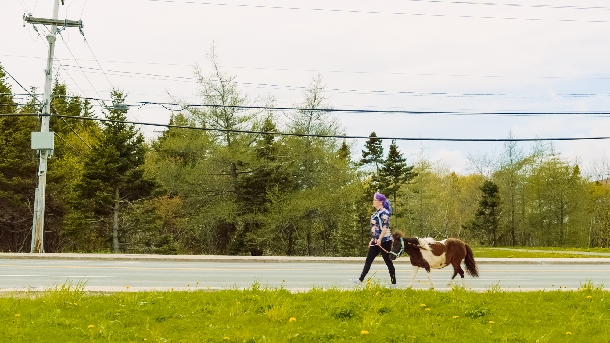 Mini pony Mount Pearl