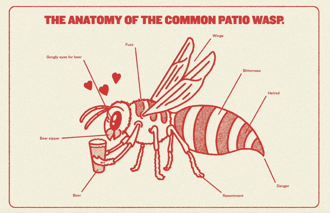 wasp_anatomy